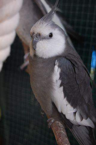 Birds 003